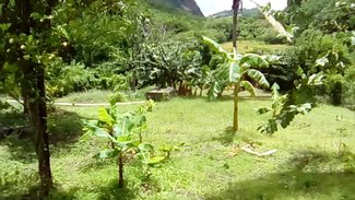 Gallery Image No. 5 for BRI 038 Trouya, St Lucia
